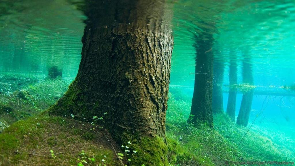 cây sồi